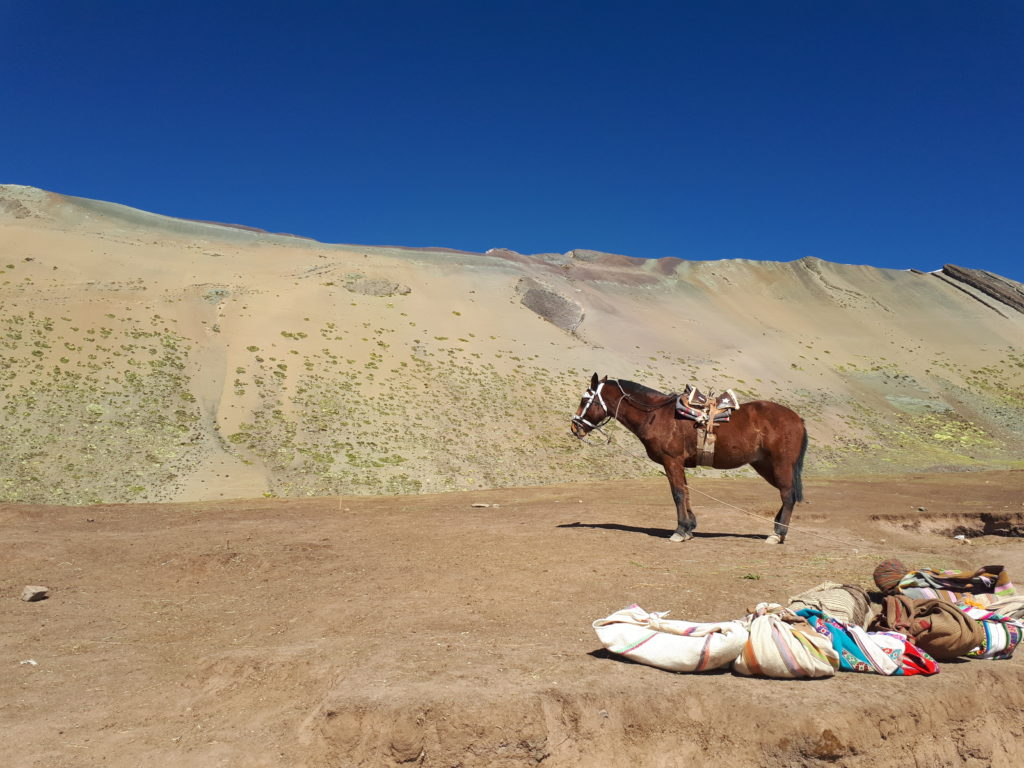 Transporte a cavalo disponível