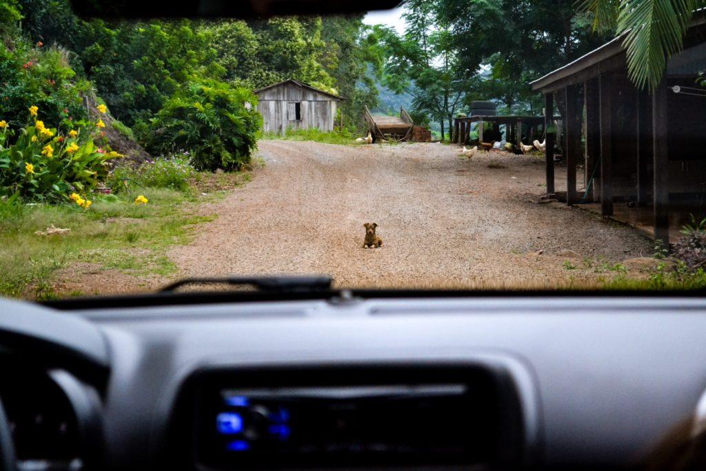 andando de carro